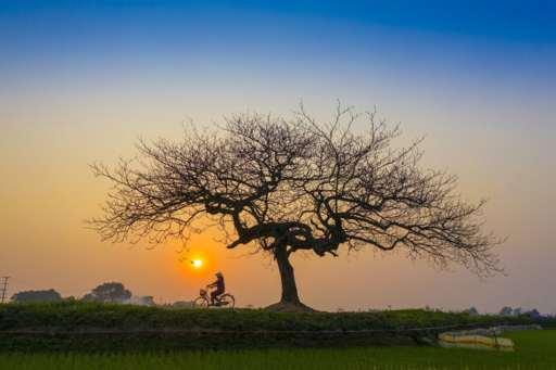 sunset-5222626_1920