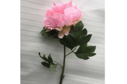 Hoa Mẫu Đơn Màu Hồng Nhạt Và Hồng Đào