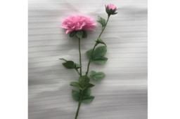 Hoa Thược Dược Màu Tím Nhạt