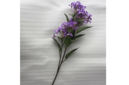 Hoa Đinh Hương Màu Tím