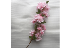 Hoa Đào Nhật Màu Hồng Đậm