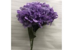 Hoa Cẩm Tú Cầu Màu Tím Và Trắng