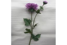 Hoa Thược Dược Màu Tím