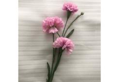 Hoa Cẩm Chướng Màu Tím Nhạt