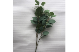 Lá Eucalyptus Hoa Màu Xanh