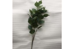 Lá Eucalyptus Hoa Màu Đen